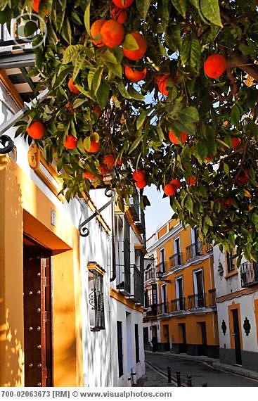 1000 images about viva el toro uno y dos on pinterest - Orange en sevilla ...