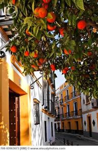 Orange Trees in Seville