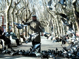 Turk feeding pigeons
