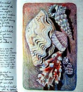 Workbook Shells