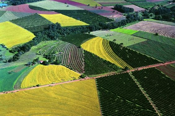French - Brazil Farmland