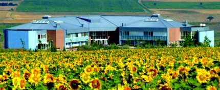 Marmara Campus in August when the sunflowers are in bloom