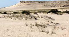 abel-dune-trail-1