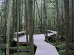 white-cedar-swamp-trail-masslive