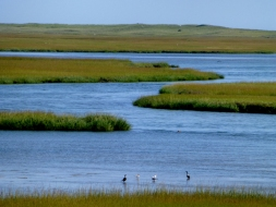 nauset-marsh-mycapecodblog